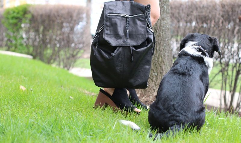 Day and Mood Fleur Backpack, Louis the Beagle dog