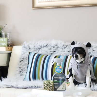 7 Essentials for a Pet Owner Cleaning Kit