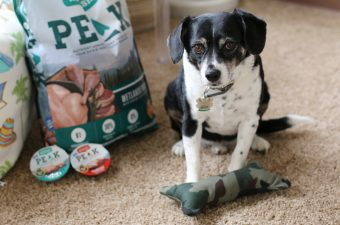 DIY Dog Bone Toy, Nutrish PEAK Dog Food, louis, beagle, pets