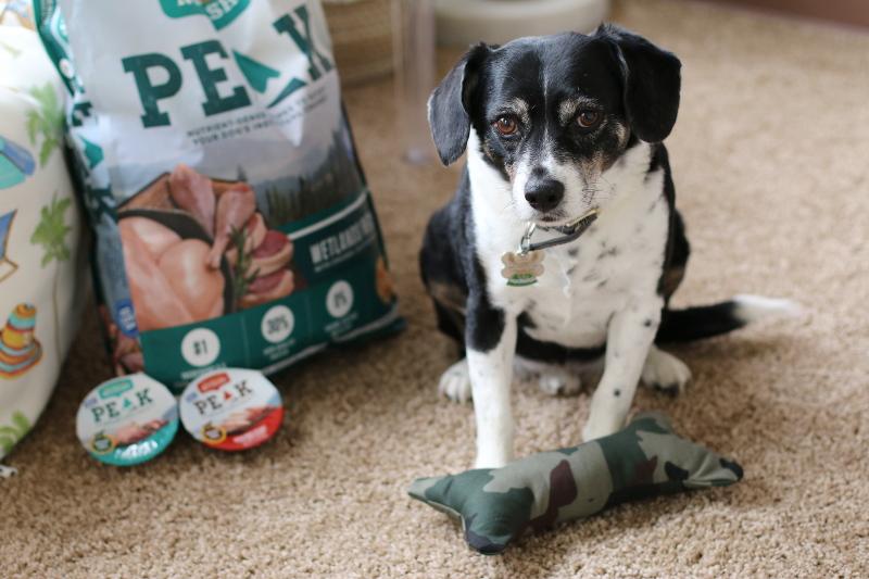 DIY Dog Bone Toy, Nutrish PEAK Dog Food, louis, beagle, pets