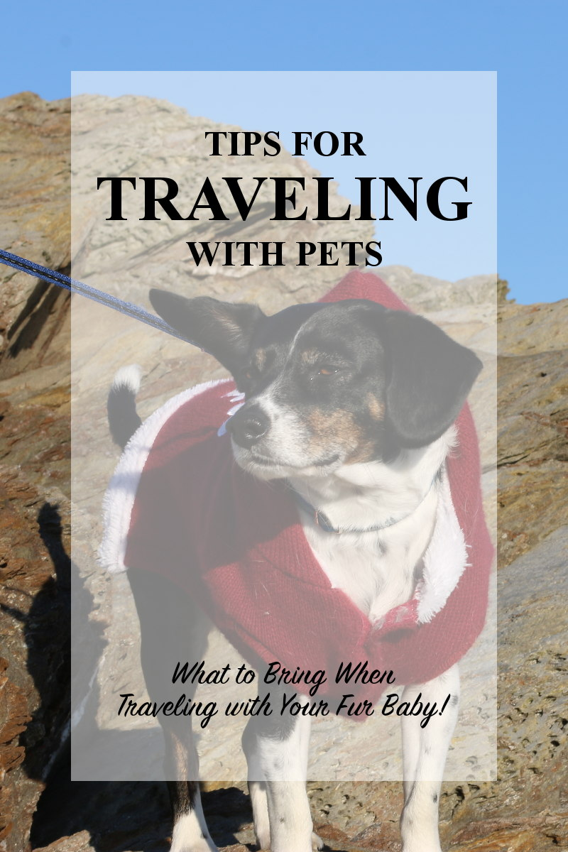tips-traveling-with-pets-pin